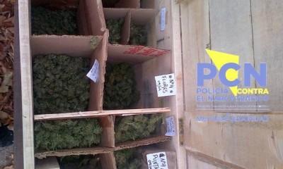 marihuana_3806145-240