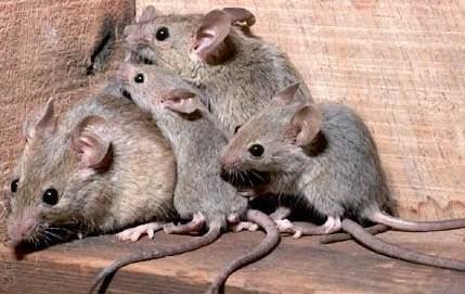 ahuyentador-de-ratas-murcielagos-ultrasonido-lauchas-ratones-4405-MLA3606418767_122012-O